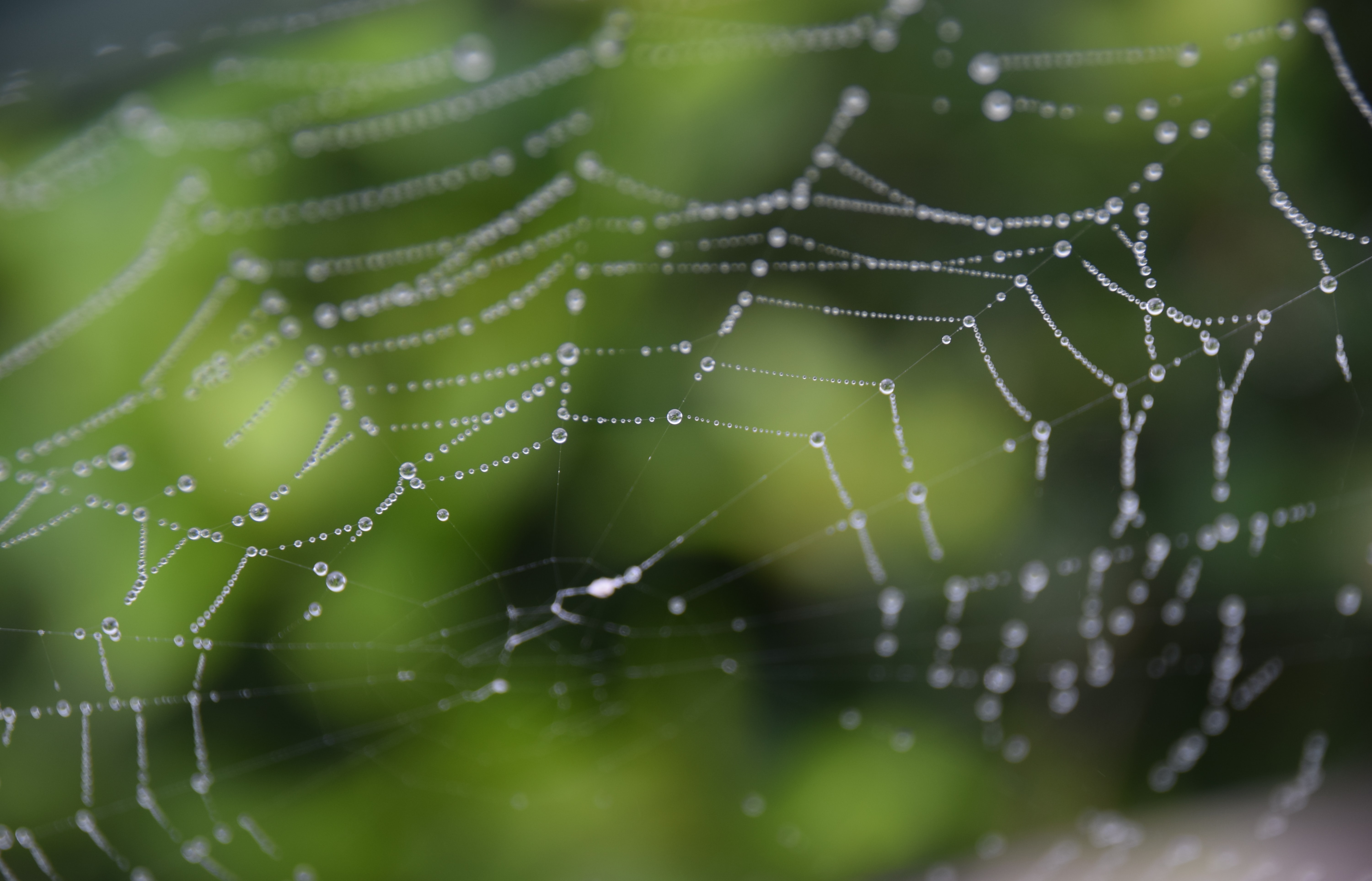 The Web of Love - a picture of a spider's web